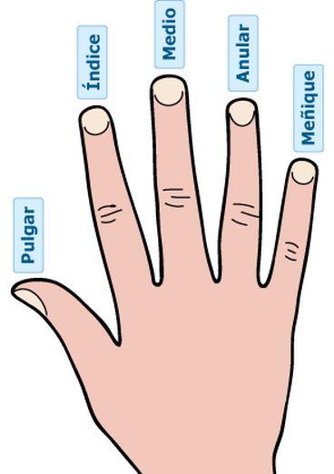 Como Se Llaman Los Dedos De Las Manos