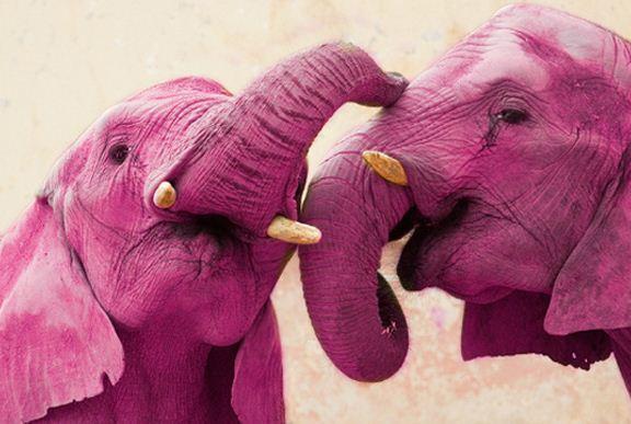 Como se llama el desafío del elefante rosa de WahtsApp