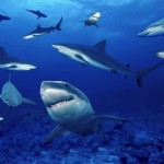 Como se llama a un grupo de tiburones