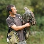 Como se llama el tipo de caza que se hace con aves rapaces