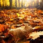 Como se llama un conjunto de hojas secas