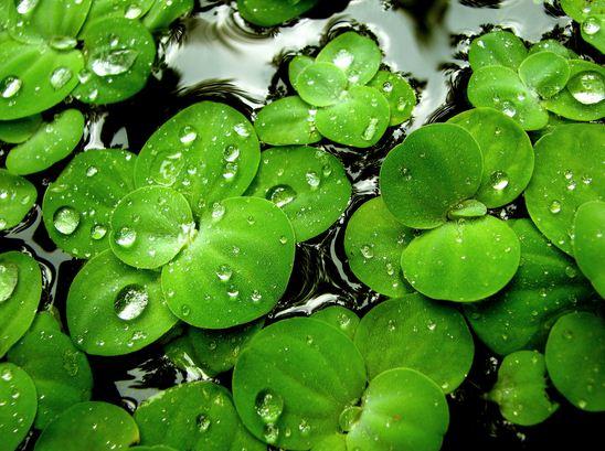 Como se llama el color verde de las hojas