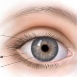 Como se llama la parte blanca del ojo