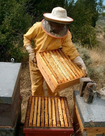 Como se llama el lugar donde viven las abejas