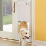 Como se llama la puerta para perros