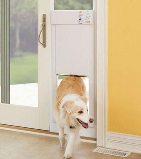 Como se llama la puerta para los perros