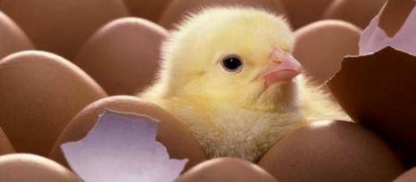 Como se llaman los animales que nacen de un huevo
