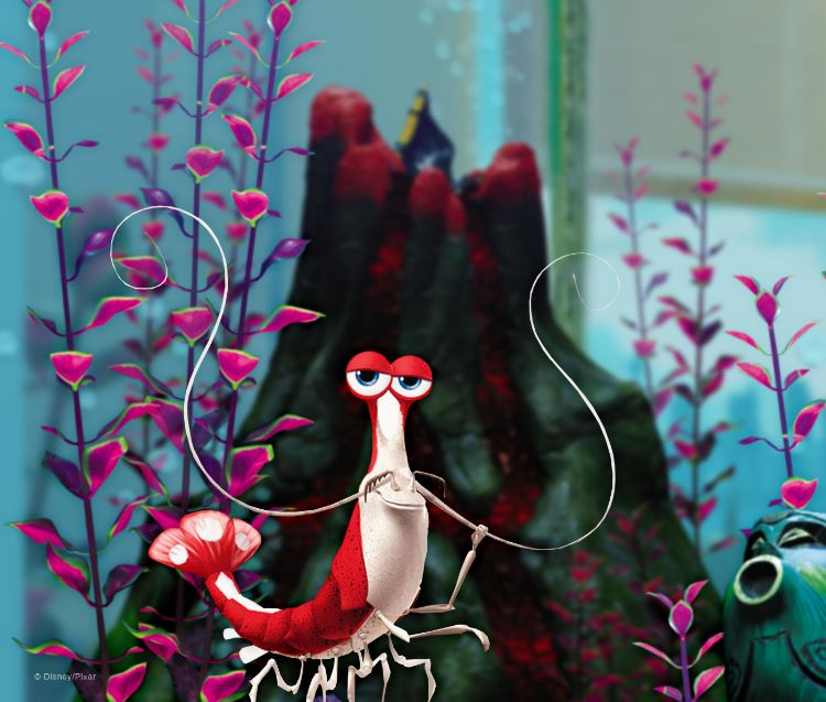 La langosta de Buscando a Nemo se llama Jacques