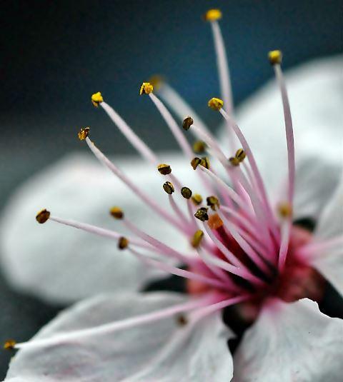 Como se llama el conjunto de estambres de la flor