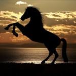 Como se llama cuando un caballo se pone en dos patas