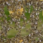 Como se llama el conjunto de abejas