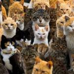 Como se llama un conjunto de gatos
