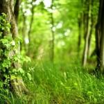 Como se llama un conjunto de árboles