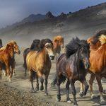 Conjunto de caballos sustantivo colectivo